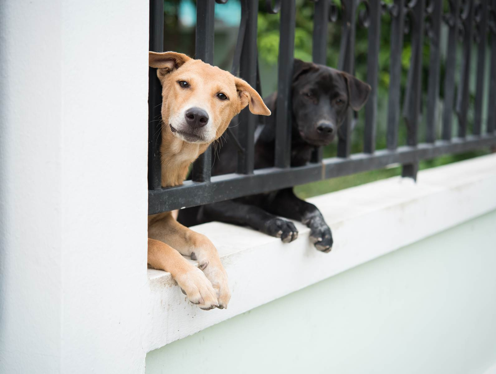 Take care of your safety - choose balcony handrails
